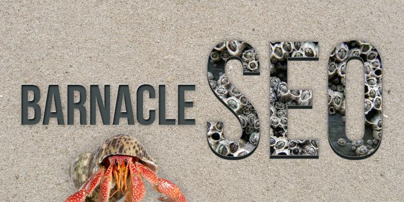 barnacle seo